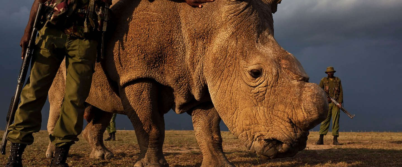 Crowdfunding campagne ter bescherming van Rhino Rangers