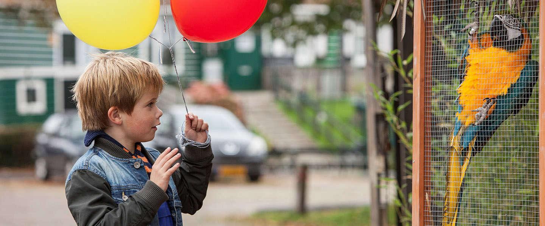 Dikkertje Dap in première tijdens Nederlands Film Festival