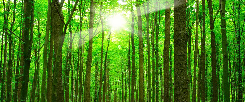 Blijf de baas in het bos