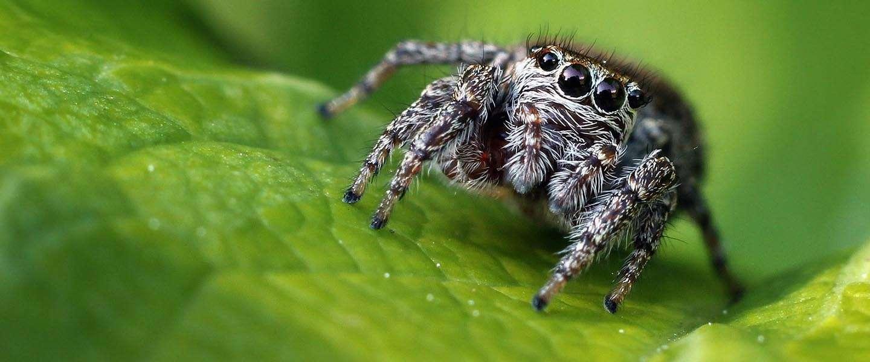 Biologen gaan de strijd aan; op zoek naar de meest schattige diersoorten #CuteOff