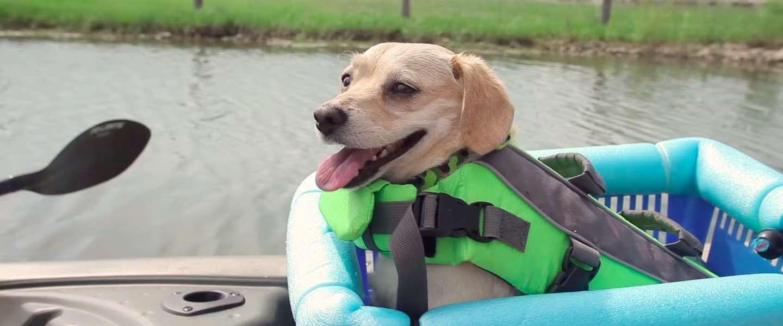 Sadvertising: het hartverwarmende verhaal van een man en zijn hond