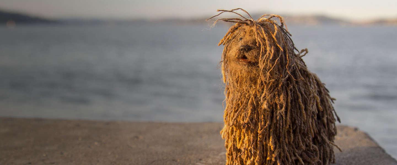 Afbeeldingsresultaat voor social media hond