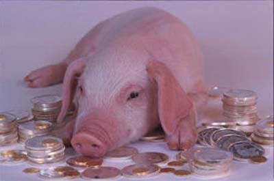 1138889977Pig in the Money