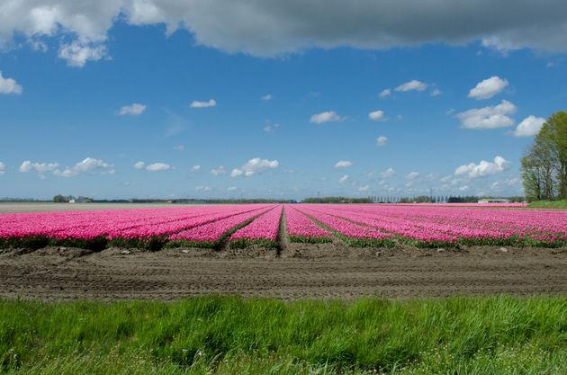 17-miljoen-inwoners-nederland