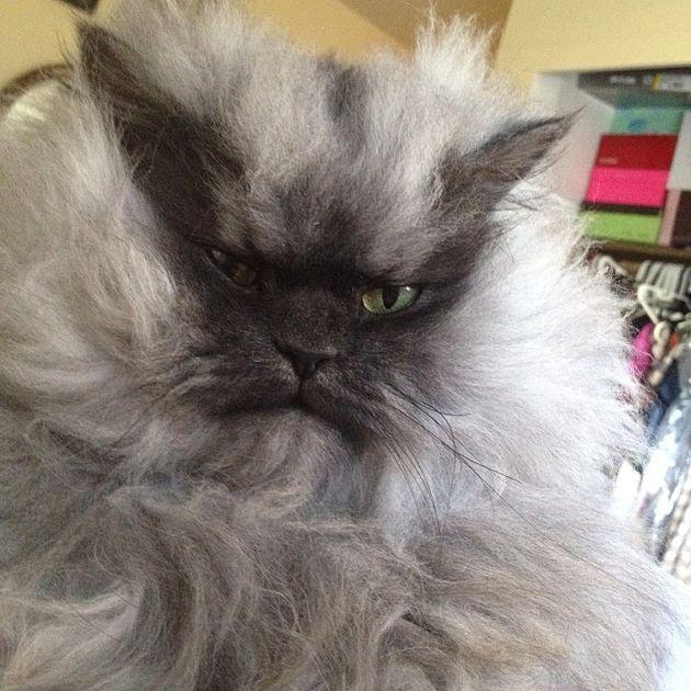 Colonel Meow is niet meer