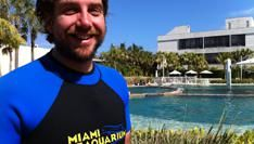 Cowboys zwemmen met Dolfijnen en Krokodillen in Miami