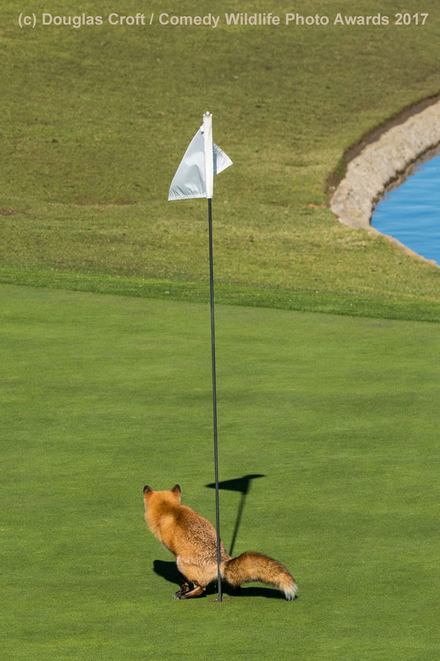 Douglas-Croft_Must-Have-Three-putted_00000012