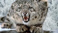 Fake Snow Leopard bevat Virus