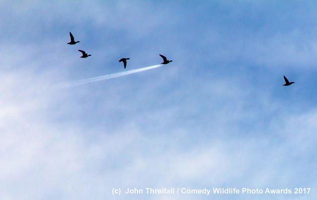 John-Threlfall_Duck-Speed_00002929