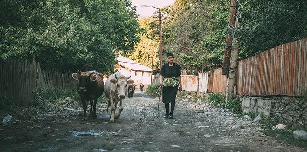 locals-georgia