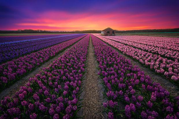 nederland_1