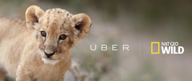Uber Lions