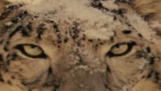 Snow Leopard Korte Uitpakparty