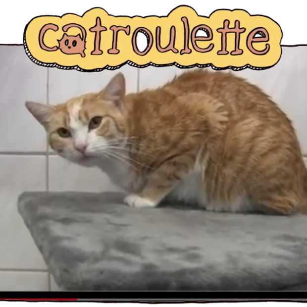 De opvolger van Chatroulette is Catroulette