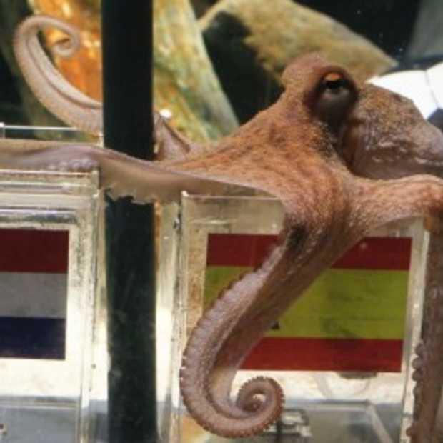 EA neemt taak van Paul de Octopus over