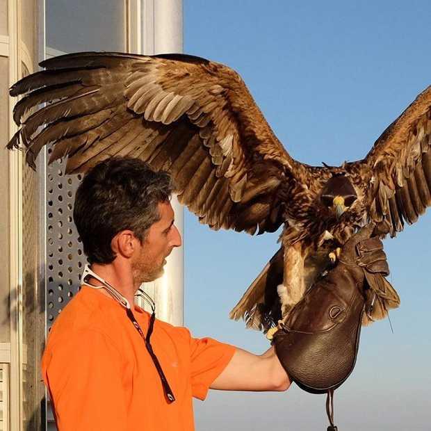 Fly like an Eagle met een action cam vanaf de Burj Khalifa in Dubai