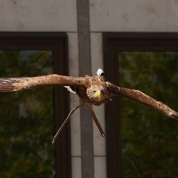 Freedom Arend duikt met een action cam omlaag van de Dom in Keulen