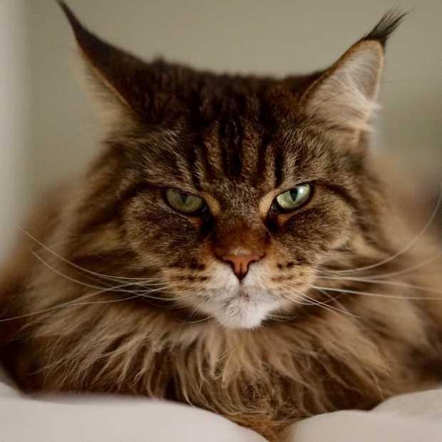 De 11 beroemdste katten van het internet!