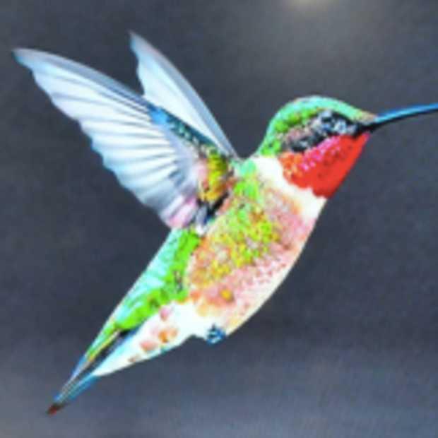 """Google zet een hele nieuwe motor in zijn Search Engine: """"Hummingbird"""""""