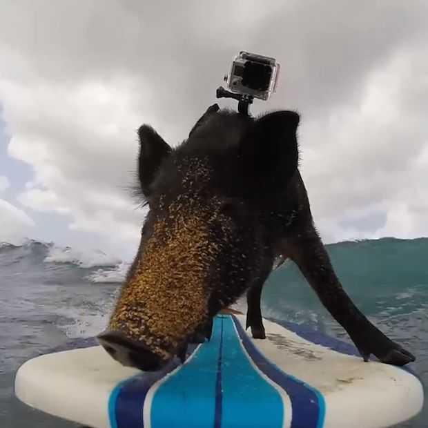 10x geweldige GoPro video's