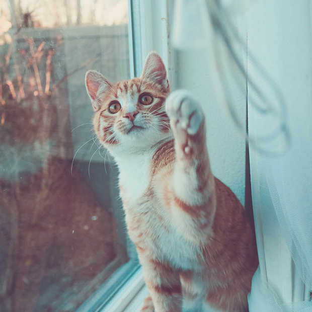 #Catmageddon een wereld zonder kattenfilmpjes