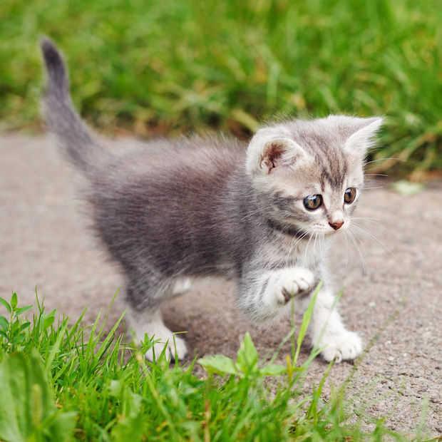 Je wordt écht gelukkiger van kattenfilmpjes