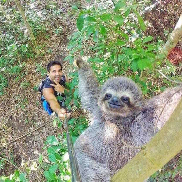 Toerist maakt coole selfie met luiaard!