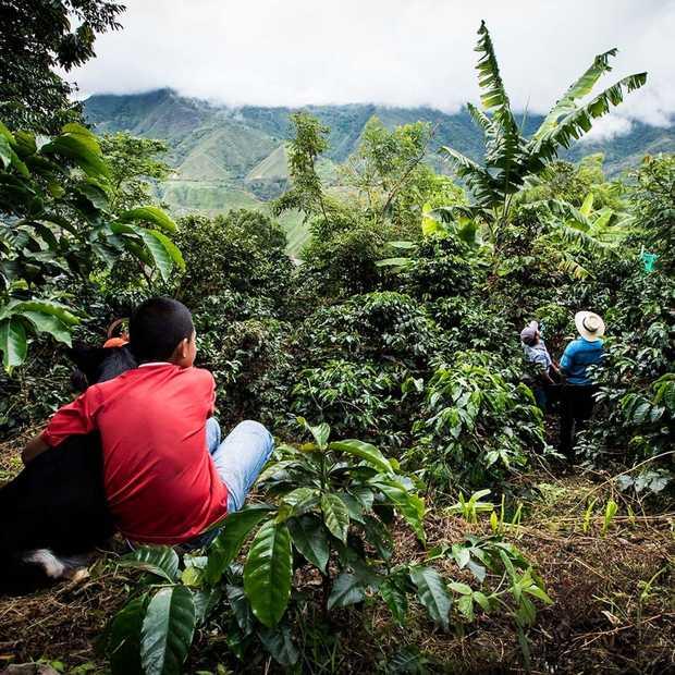 360º rondkijken op de koffieplantages van Nespresso in Colombia
