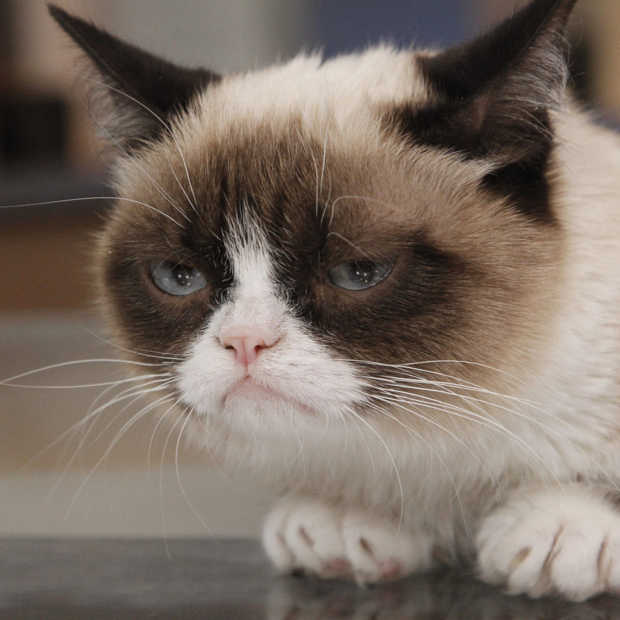 grumpy cat nu ook in madame tussauds. Black Bedroom Furniture Sets. Home Design Ideas