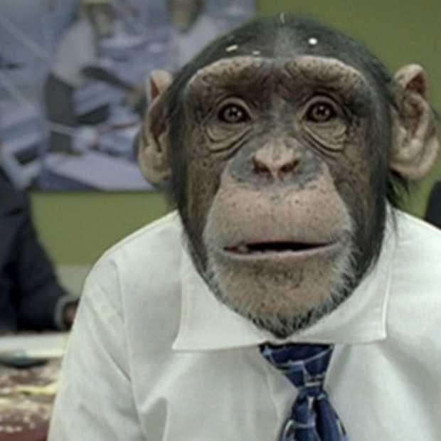 Organisaties erin geluisd door grappige kantoorchimpansees