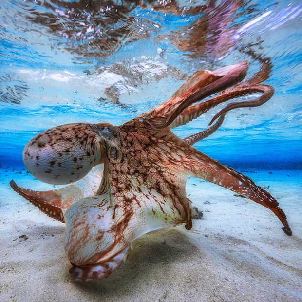 De beste onderwaterfoto's van 2016 zijn waanzinnig goed