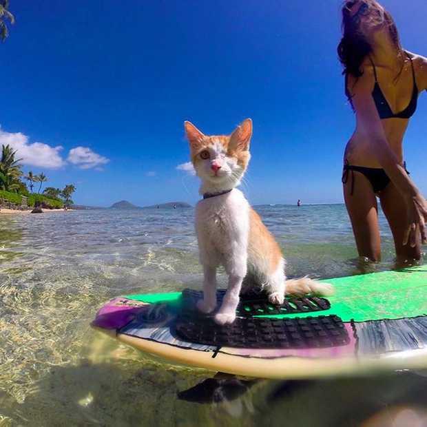 Briljante foto's van surfende kat met maar één oog!