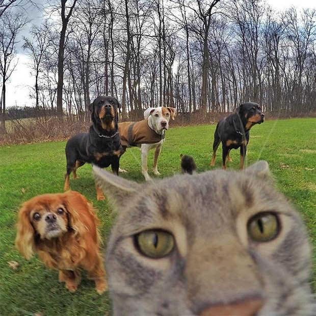 Deze kat neemt betere selfies dan jij doet