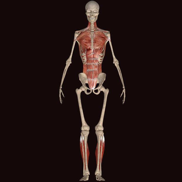 7 mythes over je lichaam die jij waarschijnlijk nog gelooft