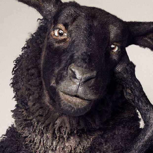 Tele2 maakt vertrek van Frank, het zwarte schaap, bekend