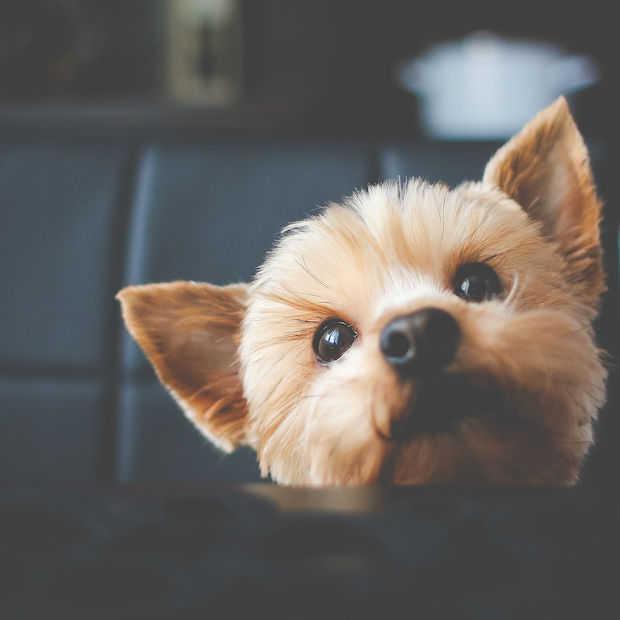 Dit Twitter-account vindt jouw doggelgänger