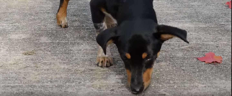 Bommen opsporen met een 3D-geprinte hondenneus?