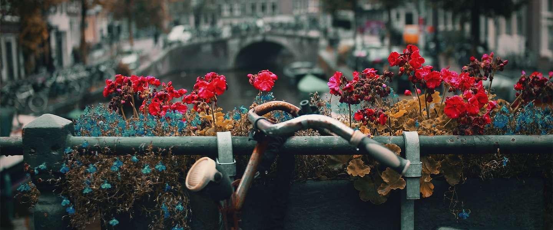 Waarom de techsector bloeit in Amsterdam