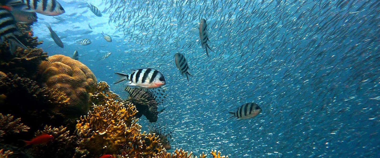 Dit beeld van een vis in een kwal is verbazingwekkend mooi