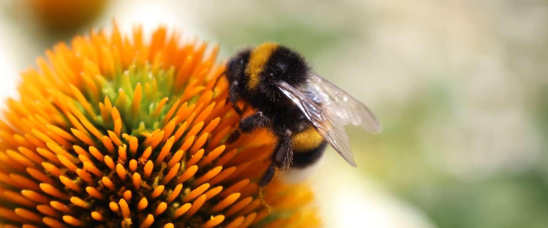 Laat deze dag niet zomaar voorBIJgaan, het is namelijk World Bee Day!