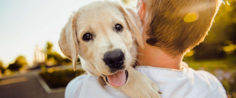 Goed Nieuws: puppy's ingesteld op mensen, Bo Burnham en magische manier om een kater te voorkomen