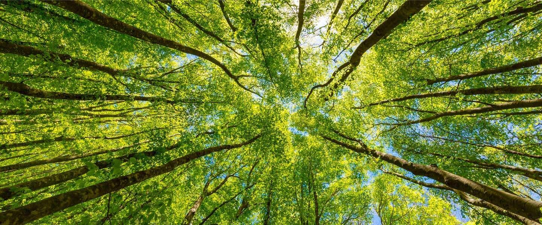 Dit is waarom we bomen planten om CO2-uitstoot te compenseren