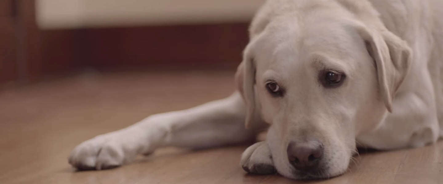 Weer een geniale video van Budweiser: Friends are Waiting