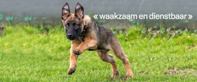 Bumper de politiehond stopt met social media