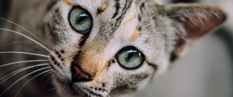 Goed Nieuws Vrijdag: katten uit de oudheid, Cursed op Netflix en plantaardige balletjes van IKEA