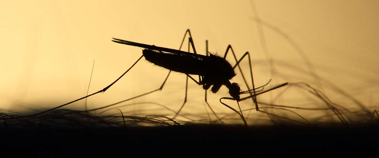Goed nieuws: oplossing voor dengue, tv-serie over zielenknijper en mondkapje kan in de prullenbak