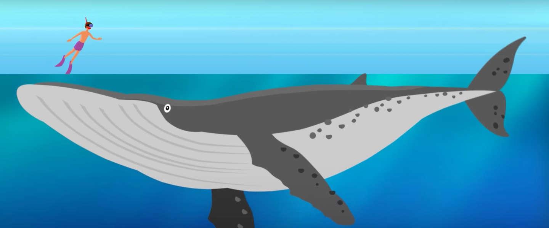 Weet je wel hoe diep onze oceanen eigenlijk zijn?
