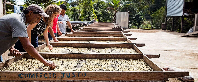 """Het is """"Wereldkoffiedag""""! Hoe gaat het met de koffieboeren?"""