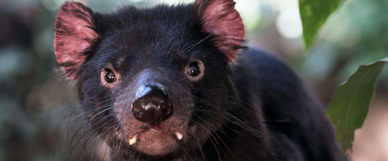Goed Nieuws op vrijdag: digitaal AR- kunstwerk van rapper Winne, Tasmanian Devils en Mel Gibson in kerstfilm