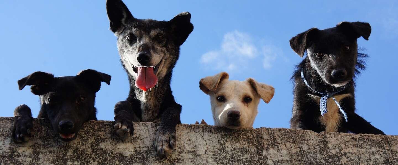 Goed nieuws: Good Girls op Netflix en de vele talenten van honden